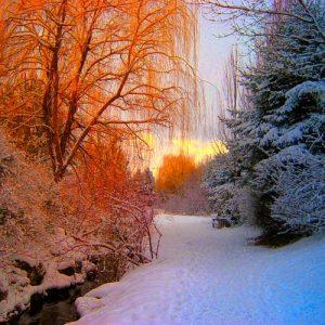Winter walks at Summercourt Cottages